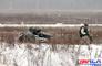 에스토니아, 완전모듈식 무장 무인지상차량 실사격시험 성공