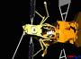 영 이펙티브스페이스,지구 정지궤도위성 서비스 추진